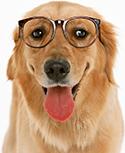 welcome dog image