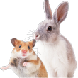 small animals image